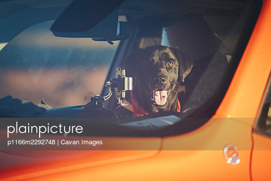 A dog is looking through a car window, Monument Valley, Arizona - p1166m2292748 by Cavan Images