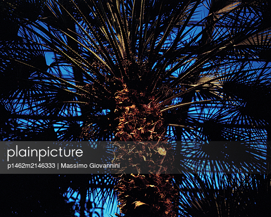 Palm trees in greenhouse - p1462m2146333 by Massimo Giovannini