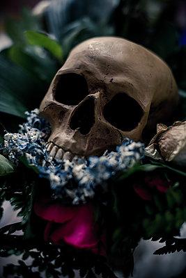 Skull - p1118m2143019 by Tarik Yaici