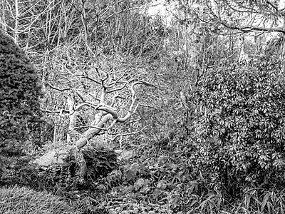 The Tree - p1543m2204122 by Sophia Snadli