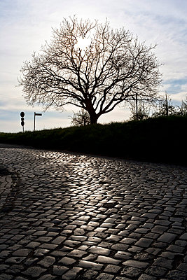 Cobbled - p4880196 by Bias