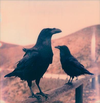 Zwei Vögel - p979m1544829 von Jennifer Rumbach