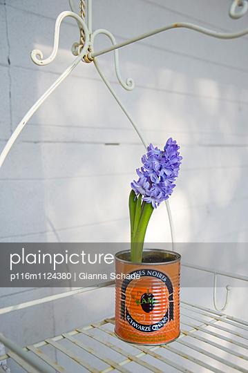 Hyazinthe in Olivendose - p116m1124380 von Gianna Schade