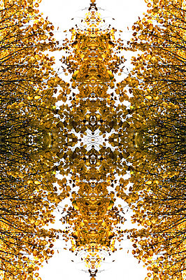Abstract kaleidoscope pattern of tree canopies in autumn - p1047m2204349 by Sally Mundy