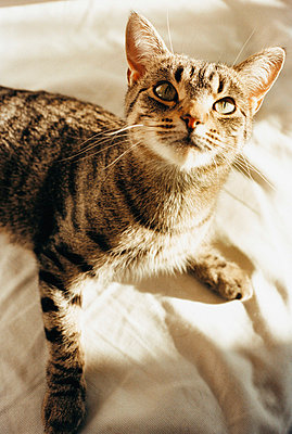 Kitten - p3123936 by Sven Olof Jonn