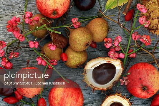 Herbst Stilleben - p1016m1539481 von Jochen Knobloch