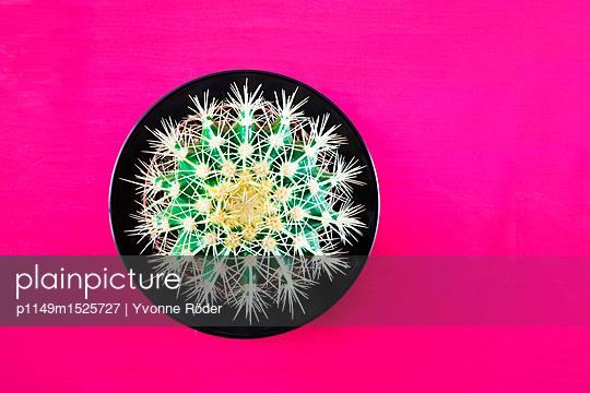 Kaktus - p1149m1525727 von Yvonne Röder