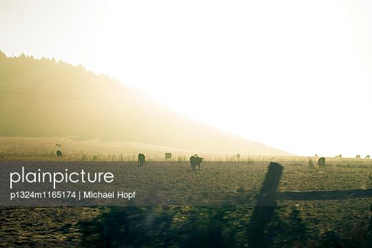 Kuhweide im Nebel - p1324m1165174 von michaelhopf
