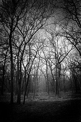 Mystischer Wald - p258m956531 von Katarzyna Sonnewend