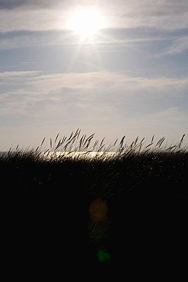 Dünengras im Gegenlicht - p4880030 von Bias