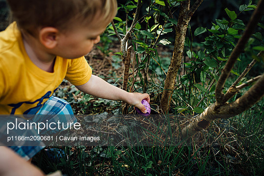 Little boy finding Easter eggs in Spring on an Egg hunt - p1166m2090681 by Cavan Images