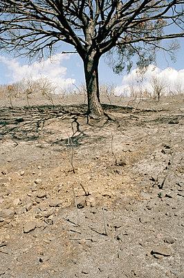 Waldbrandwüste - p2684252 von Stephan Sasek