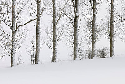 View of snow covered trees at Rhoen Mountains - p300m718956f by Martin Rügner