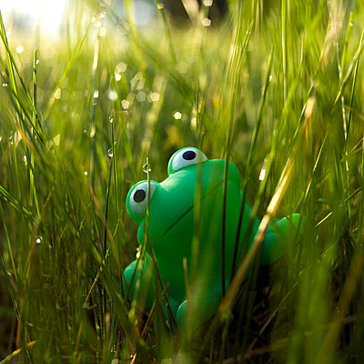 Plastic frog looking up into the sky - p8130067 by B.Jaubert