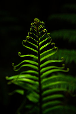 Fern - p1655m2233658 by lindsay basson