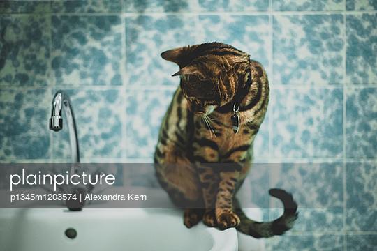 Bengalkatze auf Waschbecken - p1345m1203574 von Alexandra Kern