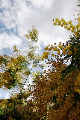 Blühend - p1174m1123169 von lisameinen