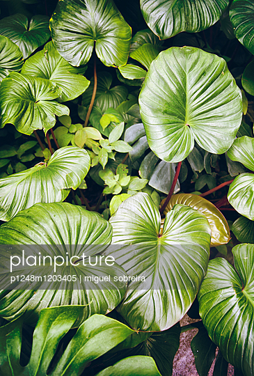 Exotic Foliage