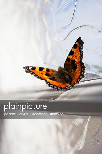 Tortoiseshell butterfly - p378m2235472 by Jonathan Browning