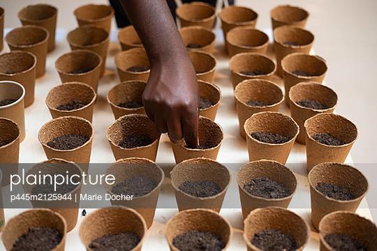Seeding - p445m2125944 by Marie Docher