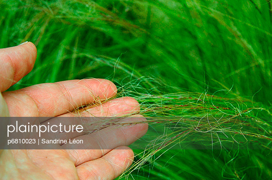 Hand caressing the grasses - p6810023 by Sandrine Léon