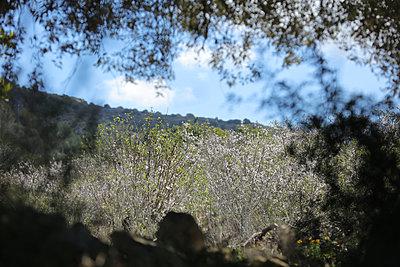 Blühende Kirschbäume - p1016m1122603 von Jochen Knobloch