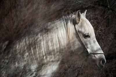 White horse - p1041m1042361 by Franckaparis
