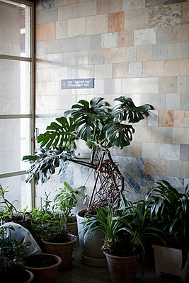 Plants in staircase - p1204m1004894 by Michael Rathmayr
