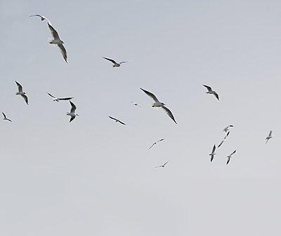 Seagulls - p4500548 by Hanka Steidle