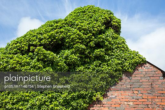 Bewachsenes Haus - p1057m1146754 von Stephen Shepherd