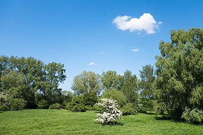 Frühlingslandschaft - p1079m1182133 von Ulrich Mertens