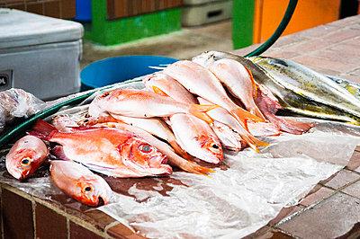 Fresh fish on market stall - p429m898317 by Lindsay Upson