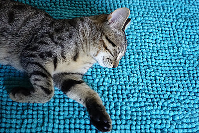 Kitten sleeping happily on a blue carpet - p927m2215708 by Florence Delahaye