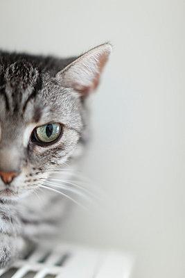 Katze - p249m793028 von Ute Mans