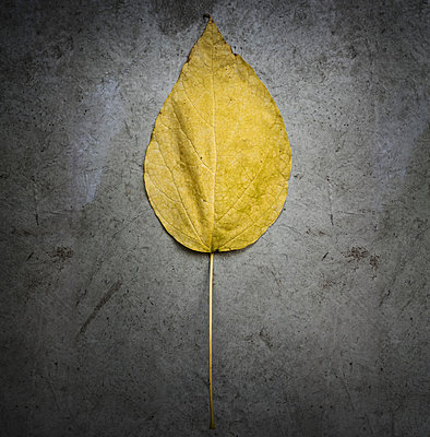 Leaf - p279m984699 by Markus Behrens