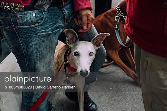 Hund - p1085m983620 von David Carreno Hansen