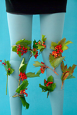 Stockings and berry - p6780037 by Christine Mathieu