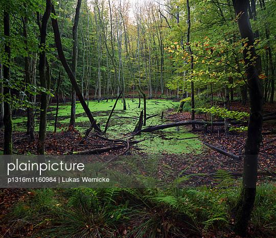 Kaltenhofer Moor , Dänischer Wohld, Rendsburg-Eckernförde, Schleswig-Holstein, Deutschland - p1316m1160984 von Lukas Wernicke
