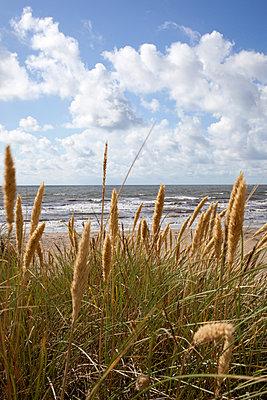 Strandgras - p304m1093931 von R. Wolf