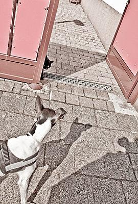 Hund und Katze - p580m1503711 von Eva Z. Genthe