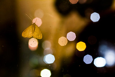Moth - p417m956454 by Pat Meise