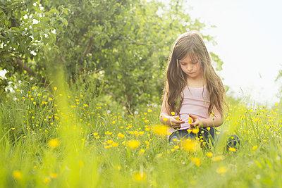 Caucasian girl picking flowers in rural field - p555m1409039 by Shestock