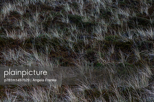 Heidelandschaft - p781m1497629 von Angela Franke