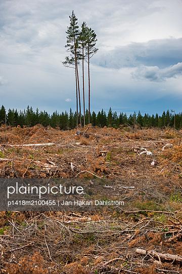 Clearcut - p1418m2100455 by Jan Håkan Dahlström