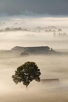 View of tree in fog - p300m659854f by Martin Siepmann