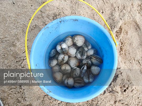 Muscheln sammeln - p1499m1588955 von Marion Barat