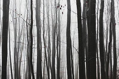 Dark forest - p1006m891388 by Danel
