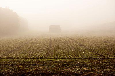 Morgennebel auf dem Land - p533m1425558 von Böhm Monika