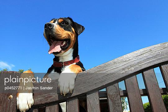 Dog behind the fence - p0452771 by Jasmin Sander