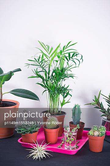 House plants - p1149m1553249 by Yvonne Röder